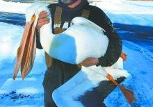 022321 nl Pelican found 2